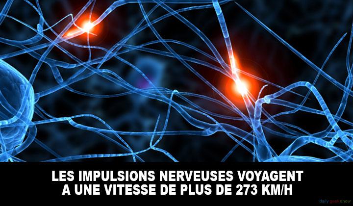 vitesse des nerfs