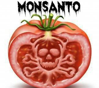 monsanto-tomate